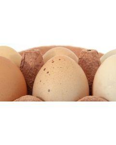 verse_eieren_bruin_klasse_a_m_dagprijs_1